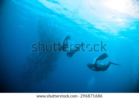 mackerel barracuda kingfish diver blue scuba diving bunaken indonesia ocean - stock photo