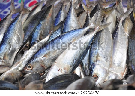 Mackerel dry - stock photo