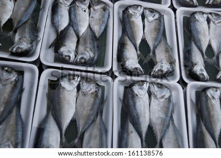 Mackerel Fish in the market