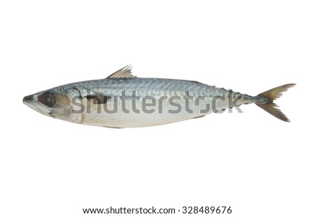 Mackerel fish isolated on the white background