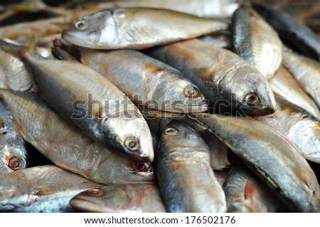Mackerel fish used as food in Thailand is sold fresh Mackerel fish and steamed Mackerel fish. - stock photo