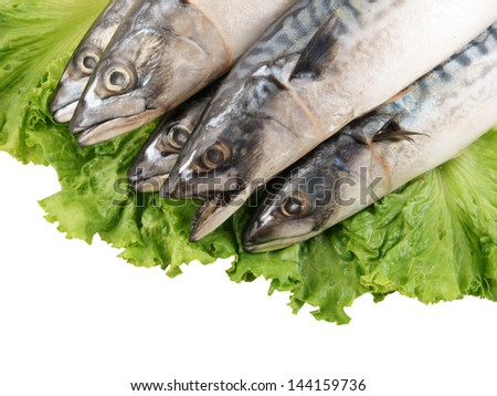 Mackerel fish with greens solated on white