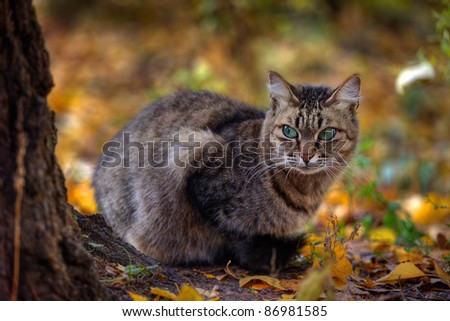 Mackerel tabby cat with green eye in autumn leaves - stock photo