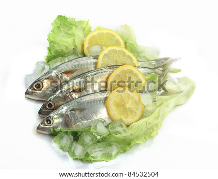 Mackerel with Lemon, salad and ice. Isolated white background. - stock photo