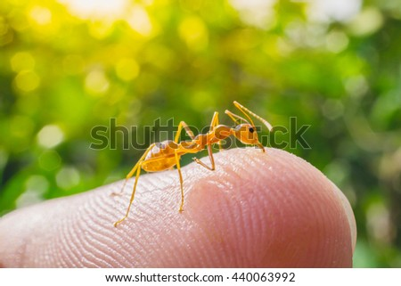 macro ant bite human finger in nature green background - stock photo