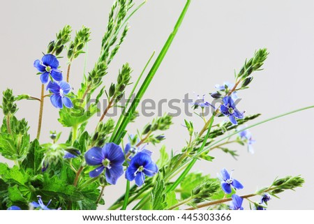 Macro beautiful and delicate bouquet of violets on a light background studio - stock photo