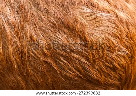 Macro  Brown Goat Hair .Macro with extremely shallow dof - stock photo