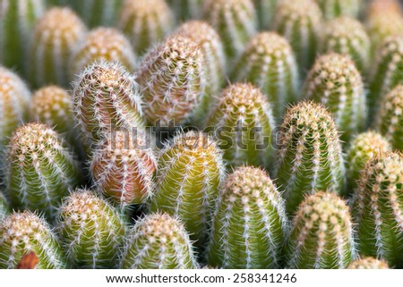 Macro close up detail of a cactus plant