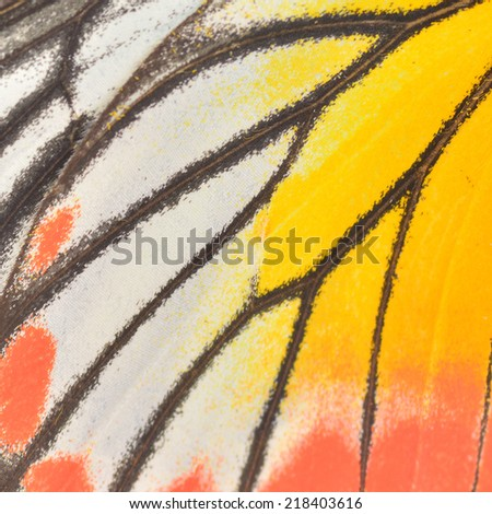 Macro close up of an Butterfly Wing  - stock photo