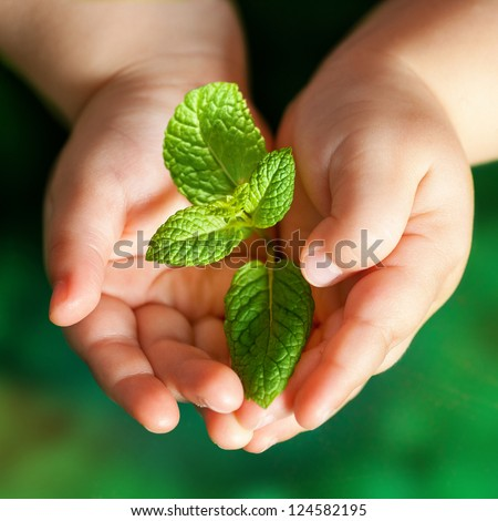 Macro close up of baby hands holding small green plant.