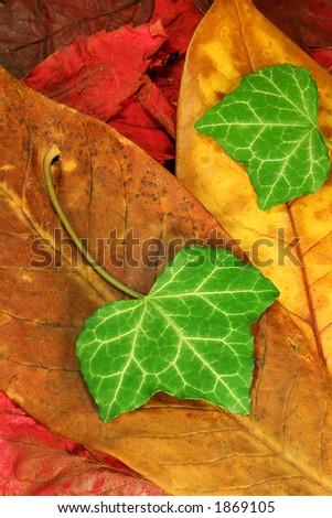 Macro close-up of fallen autumn leaves - stock photo