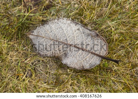 Macro close up of the underside of a single fallen hairy leaf, with hoarfrost on the edges - stock photo