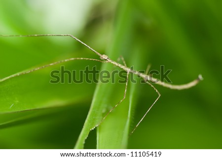 Macro/close-up shot of a stick insect