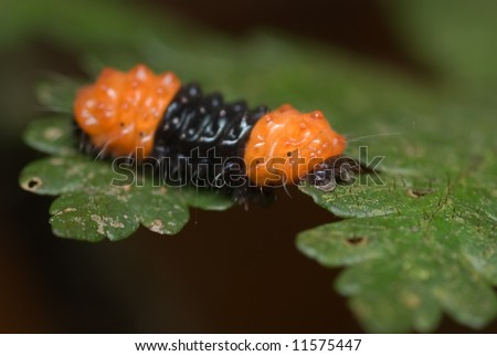 Macro/close-up shot of an orange and black caterpillar on a green leaf