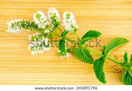 Macro closeup of fresh home-grown mint and flower - stock photo