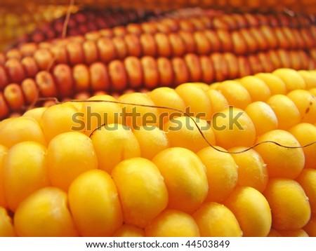 Macro Corn - stock photo