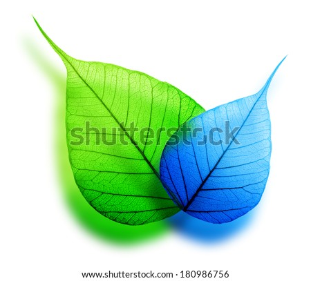 Macro green and blue leaf abstract eco background - stock photo