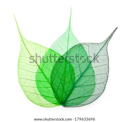 Macro green leaves isolated on white background - stock photo