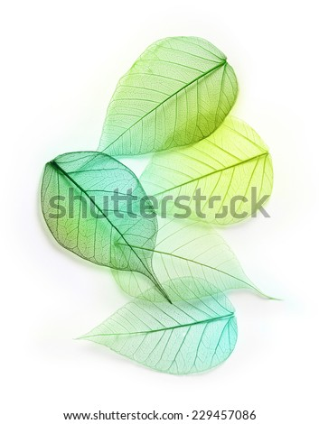 Macro green leaves texture background. Foliage decoration pattern. - stock photo