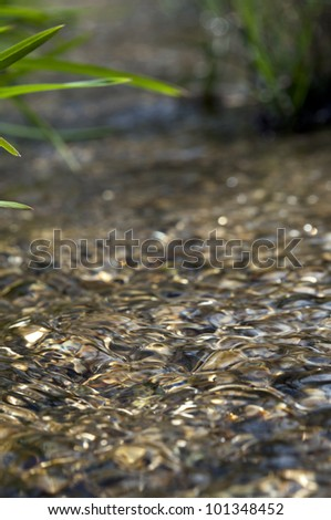 macro image from very low point of view along mountain stream flowing upstream - stock photo