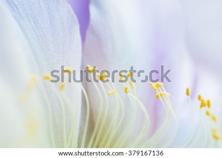 Macro image of beautiful cactus flower, small depth of field. Spring flowers background - stock photo
