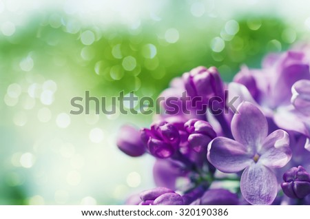 Macro image of spring lilac violet flowers, abstract soft floral background with copyspace - stock photo