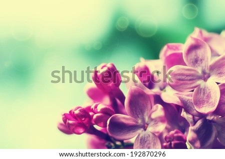 Macro image of spring lilac violet flowers, floral vintage background - stock photo