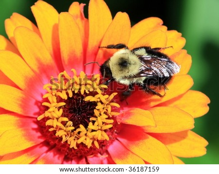 Macro image of the bee on the flower