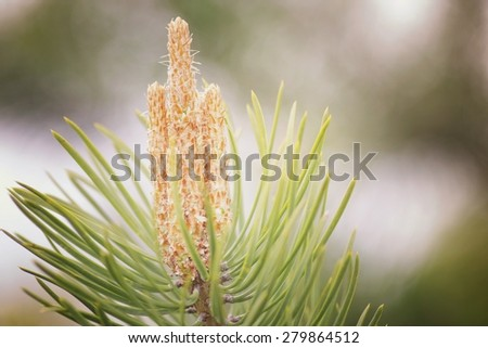 macro leaves and thorns on the trees - stock photo