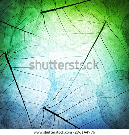 Macro leaves background texture - stock photo
