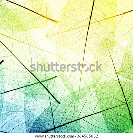 Macro leaves background texture. - stock photo