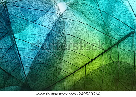 Macro leaves background texture over spotted background. - stock photo