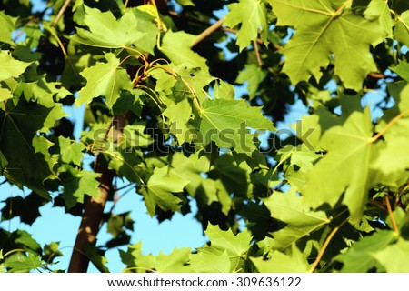 macro leaves of the trees against the sky - stock photo