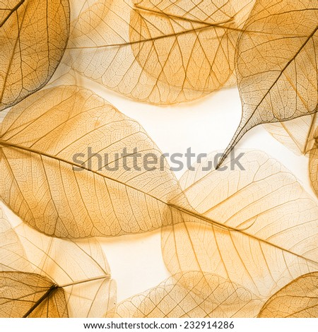Macro leaves seamless background texture, pattern - stock photo