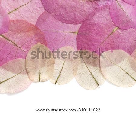 Macro leaves texture background, beautiful pattern  - stock photo