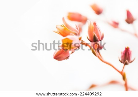 Macro Nature Background. Beautiful Tiny Flowers in Macro Photography on Solid White Background. - stock photo
