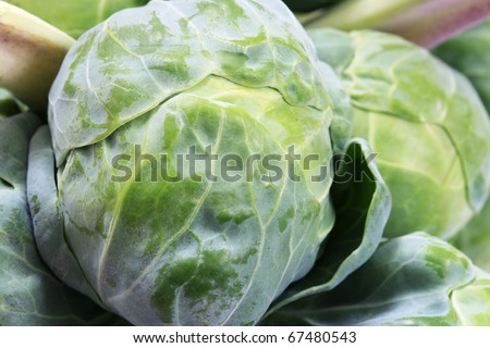 macro of a brussel sprout on a stalk of brussel sprouts - stock photo