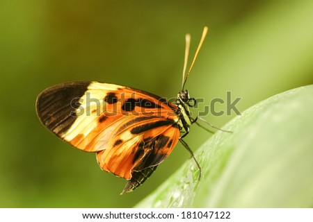 macro of a butterfly on green vegetation