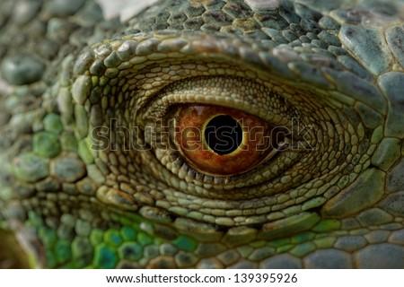 macro of a fantastic green iguana eye - stock photo