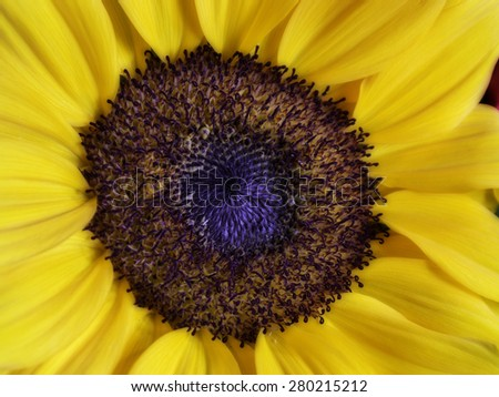 macro of a flower with yellow petals - stock photo
