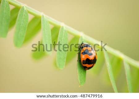 Macro of a ladybug on green nature background