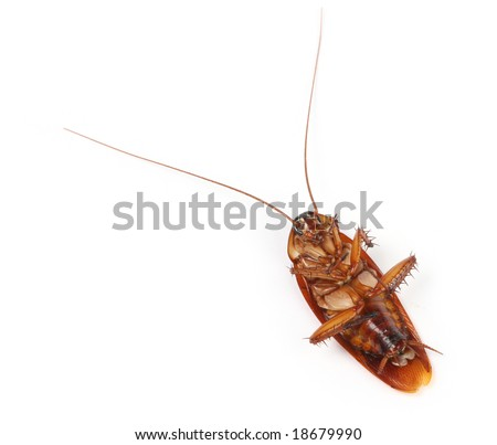 Macro of a large tropical cockroach - stock photo