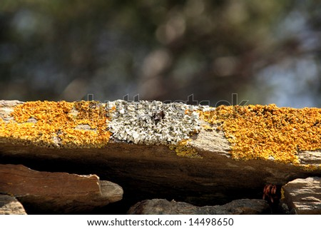 macro of a rock with yellow and white moss - stock photo