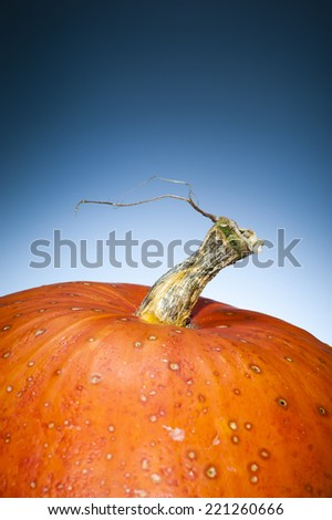 Macro of a spotted ripe orange pumpkin with copy space. Its stem is like a death tree shaped. Shooting studio on dark blue grey background. Contemporary and minimalist still life. - stock photo