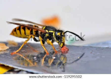 Macro of a wasp on a bread knife - stock photo