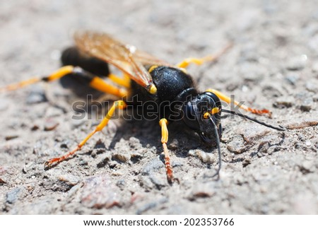 Macro of a wasp on a nature background