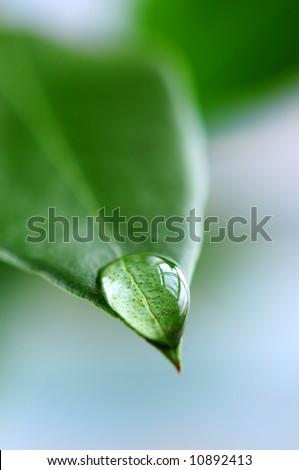Macro of a water drop on the tip of a green leaf - stock photo