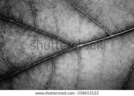 Macro of an Oak tree leaf with autumn colors - stock photo