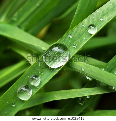 Macro of big drop. Nature composition. - stock photo