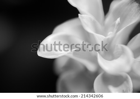 Macro of Black and white flowers
